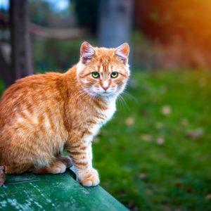 5 Cara Mengusir Kucing Berikut Ini Gampang Banget Buat Kamu Coba!