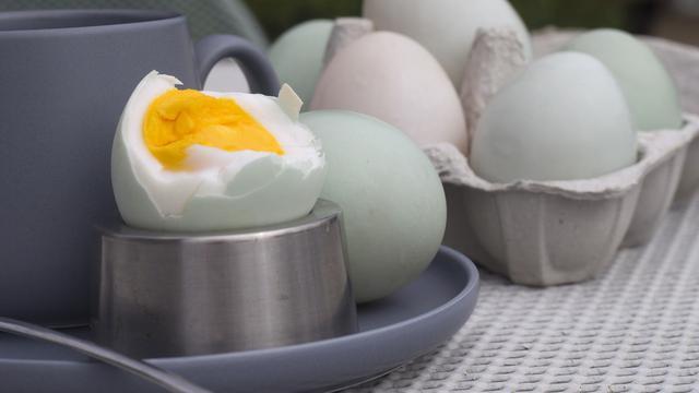 manfaat telur bebek untuk kesehatan by https://hot.liputan6.com/